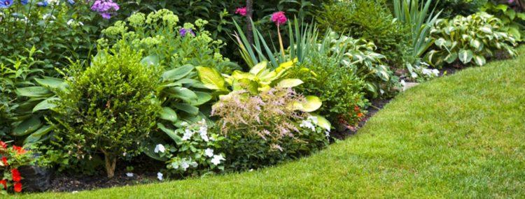 Tuin_met_bloemen